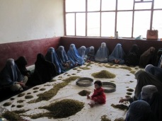 Afghan war widows cleaning raisins. These were the only women allowed to work in the province. Summer 2009.