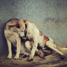 Dogs in Russia. The basic elements of life, including compassion and suffering, are not restricted by geographical borders or species.